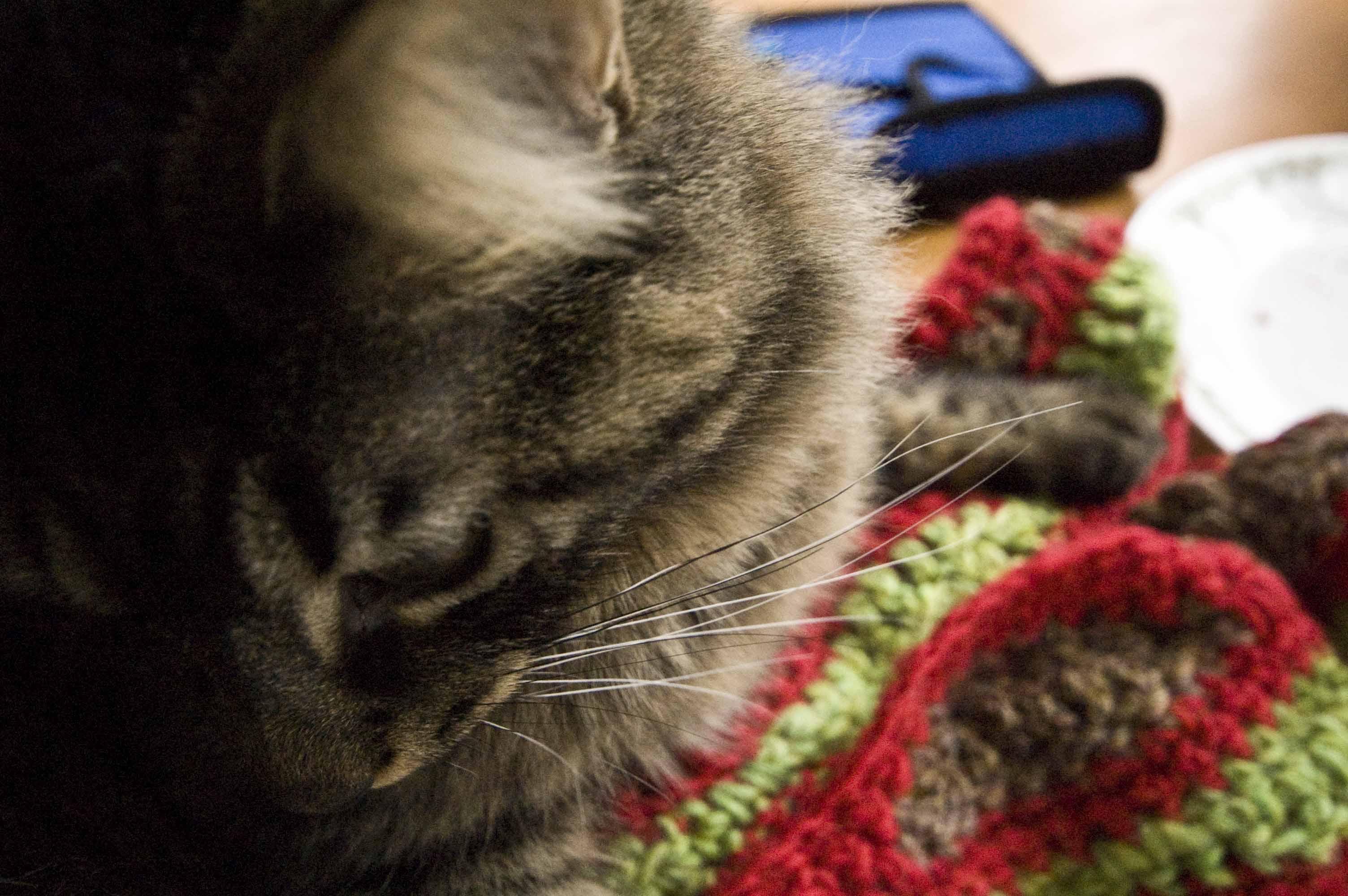Mosaic Scarf's Little Sister: Free Crochet Pattern