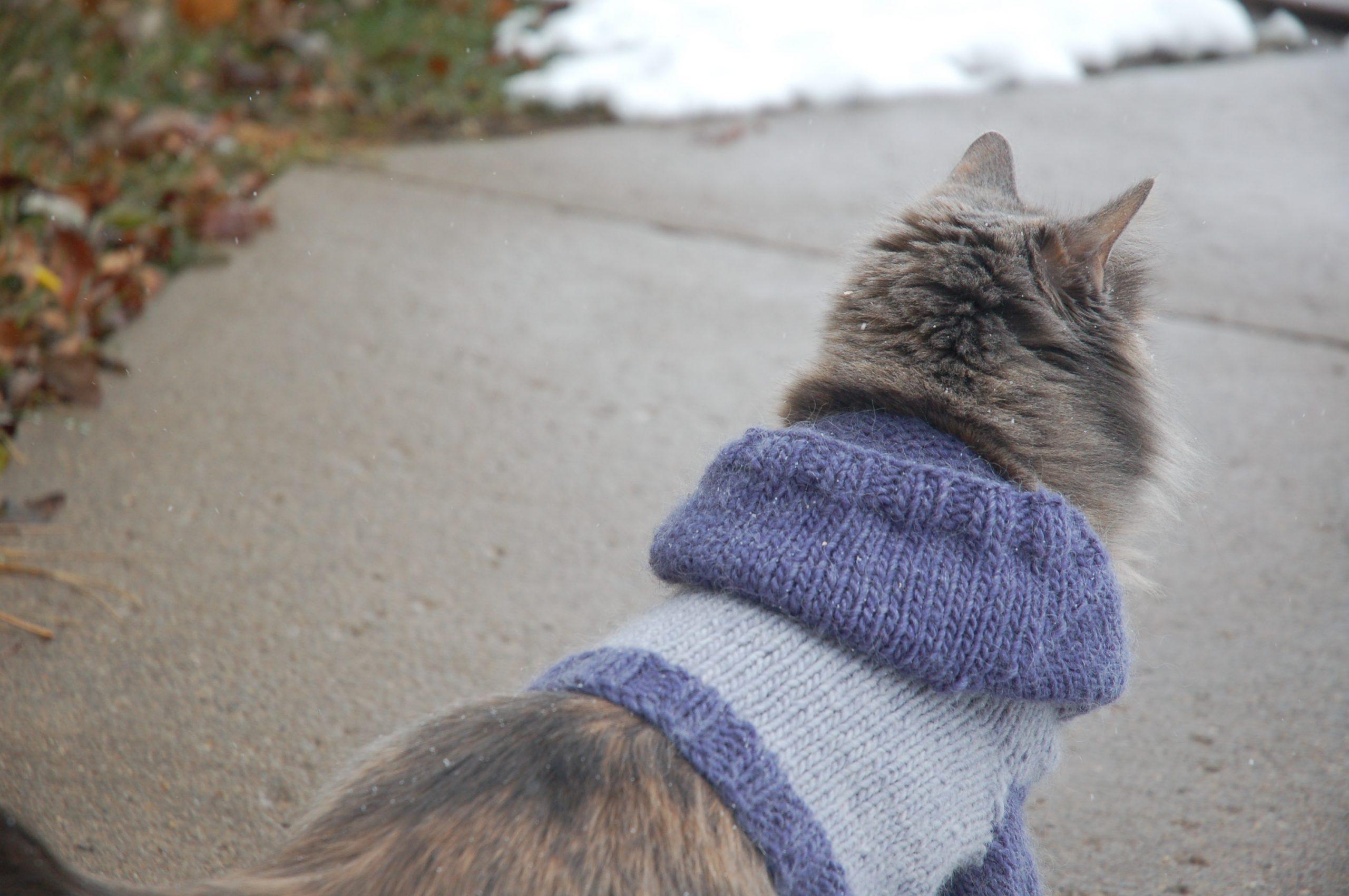 Knit Pattern: Cat Hoodie